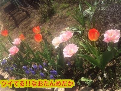 20150406185401c3d.jpg
