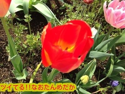 20150412181346b3f.jpg