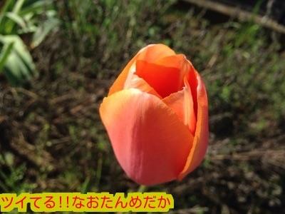 20150419173519957.jpg