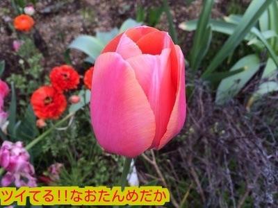 20150425182024c5a.jpg