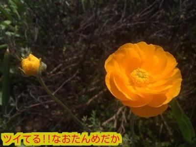 20150426184635d15.jpg