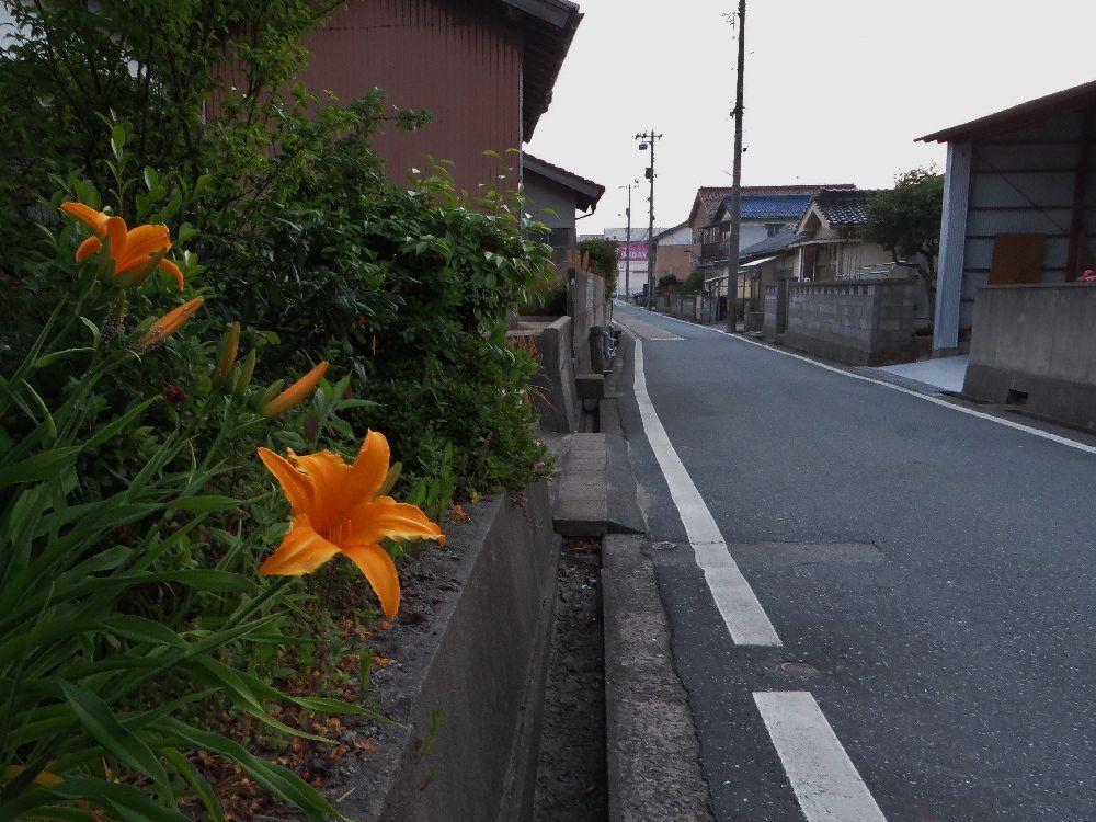 IMG_3541.jpg