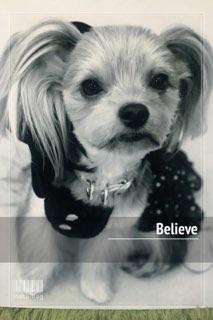 Believeバナー
