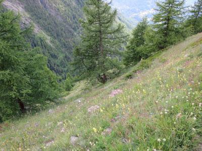 Zermatt_20