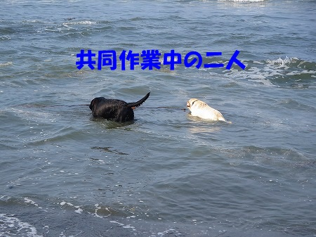 IMG_7087.jpg