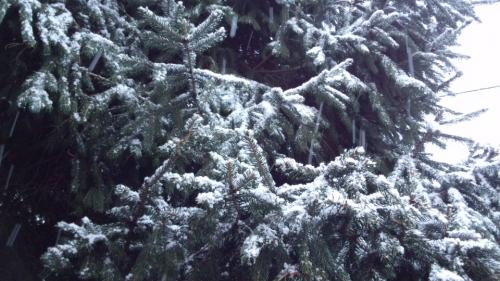 2015-2-13雪2