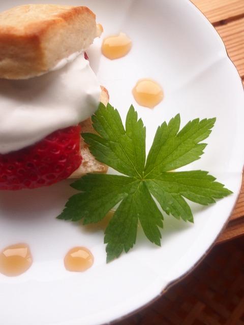 いちごショートケーキ5