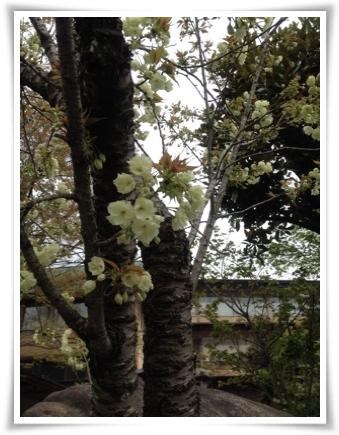 kyoto2a.jpg