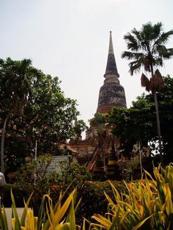 タイ1 (79)