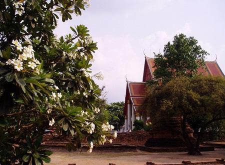 タイ1 (109)