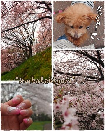 2015sakura4.jpg