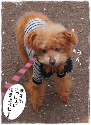 2015sakura5_s.jpg