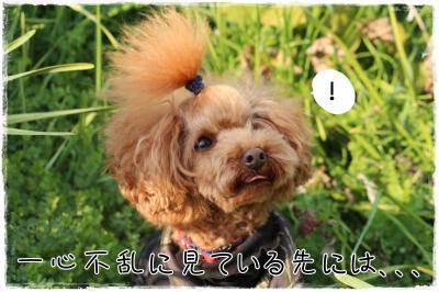 awaji25_s.jpg
