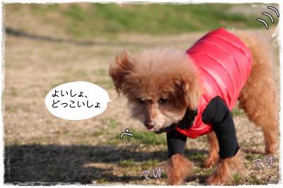 awaji33_s.jpg