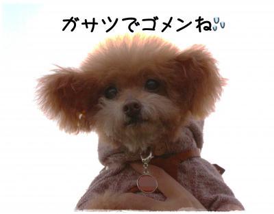 awaji40_s.jpg