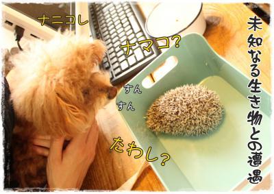 mokyu5_s.jpg