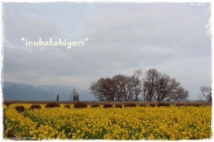 nabana1_s.jpg