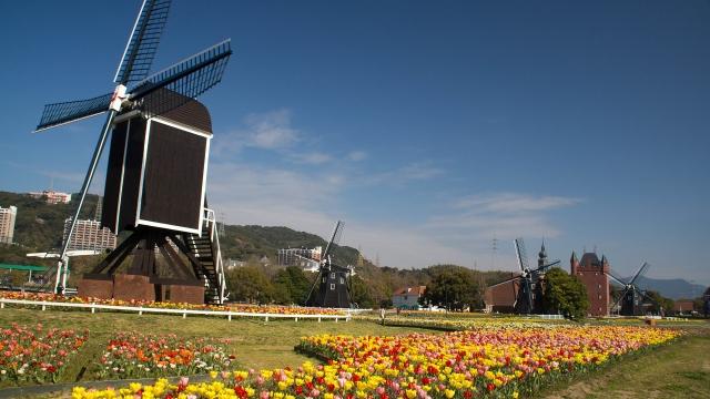 風車とチューリップ