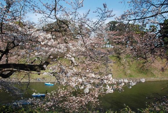 対岸の桜はまだまだって感じでした