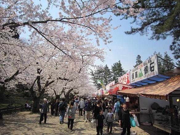 この広場も桜でいっぱい