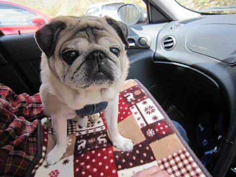 車の中でも寝ていました(-_-;)
