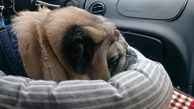 車の中ではホントに良く寝る