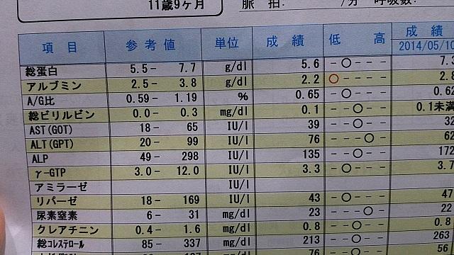 アルブミン値だけ赤丸(-_-;)