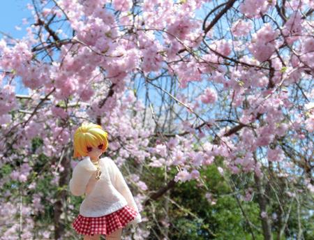 27_04_06 佐野の城山公園でお花見