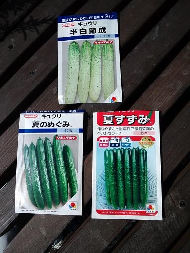 20150314_きゅうり播種