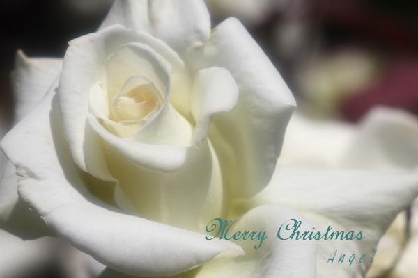マダムサチ(201405176678)クリスマスバージョン