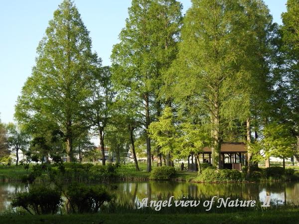 水元公園(201504260010)