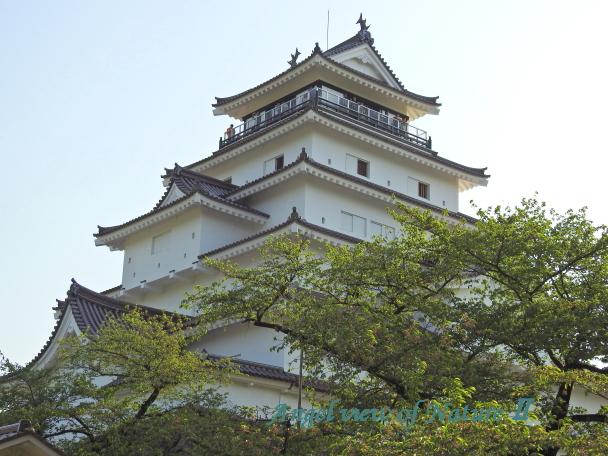 鶴ヶ城(20150502012)
