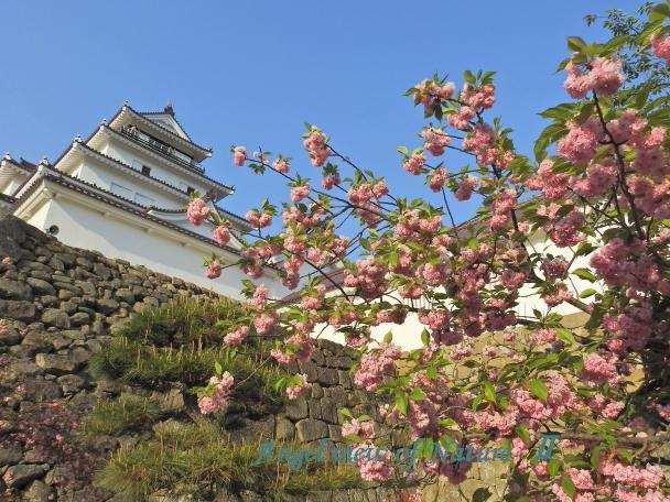 鶴ヶ城(20150502033)