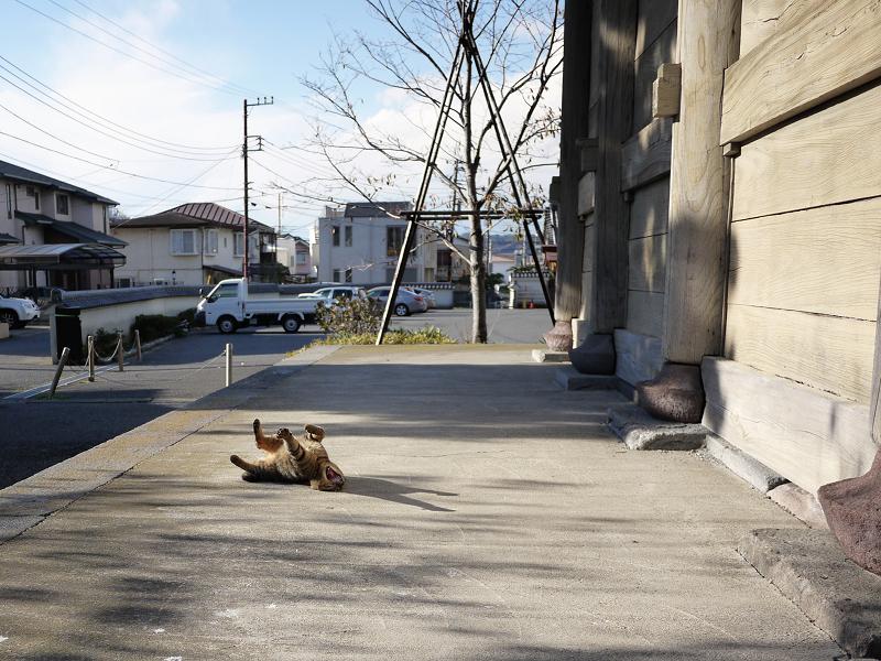 門の横で欠伸する猫