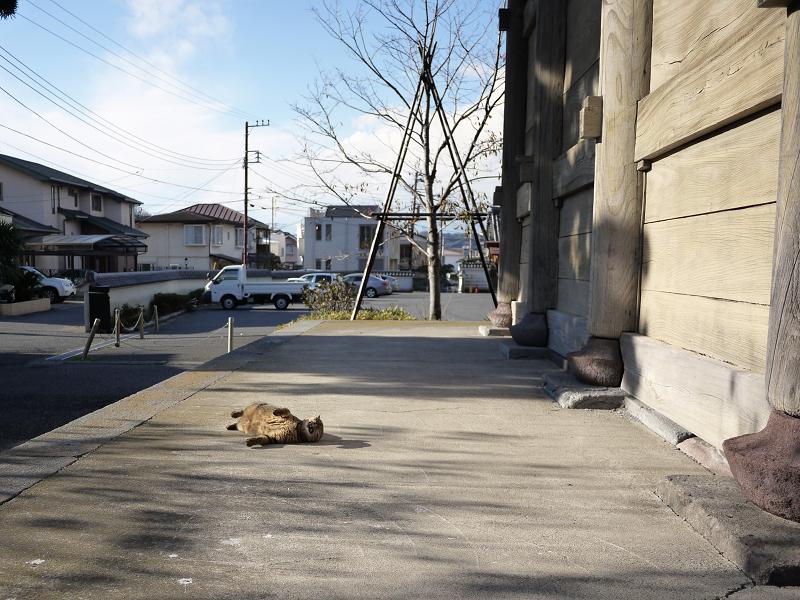 門の横で仰向けになる猫