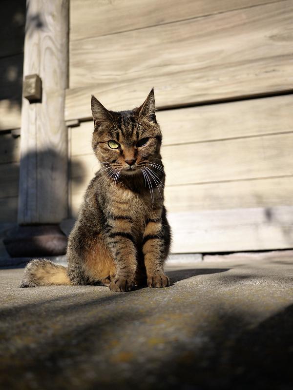 ジーッと睨む猫