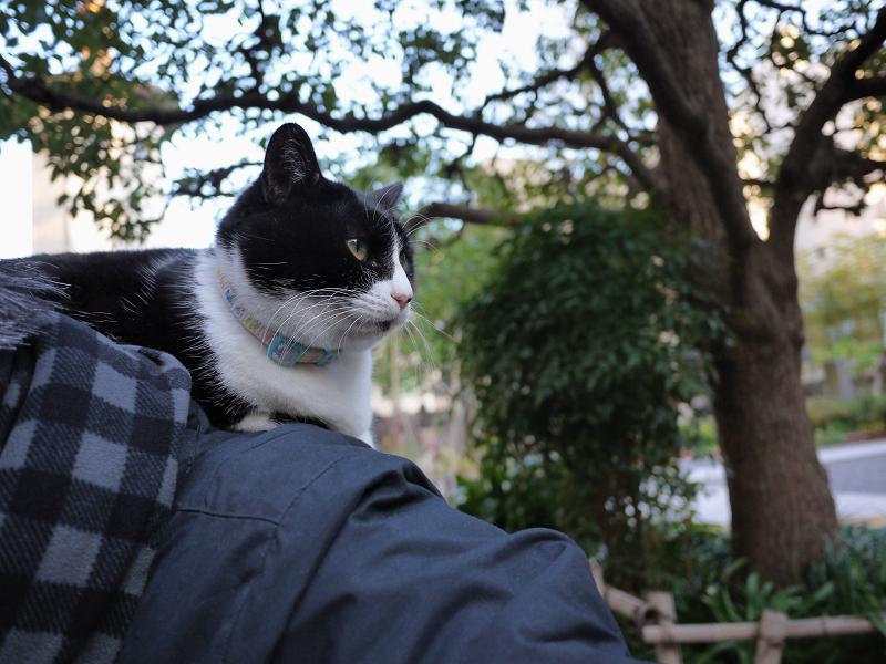 肩に乗る猫1