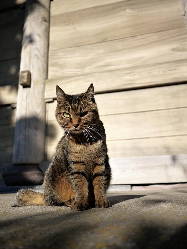体を傾げて睨む猫
