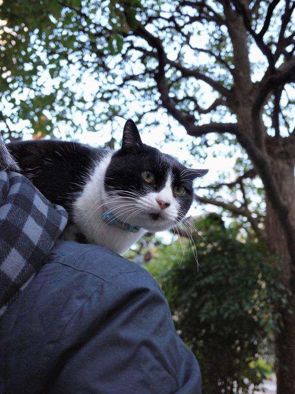 肩に乗る猫2
