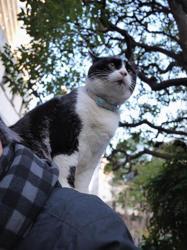 肩に乗る猫3