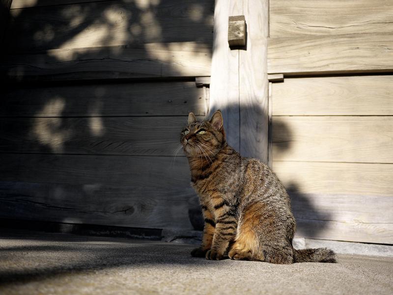 門の横で見上げる猫