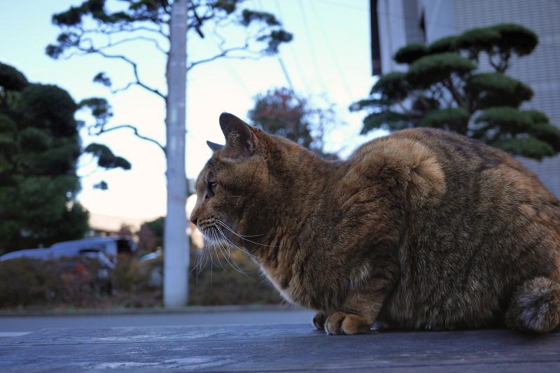 床几に乗ってるサビ猫
