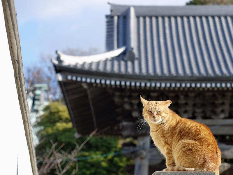 寺の屋根が背景の猫