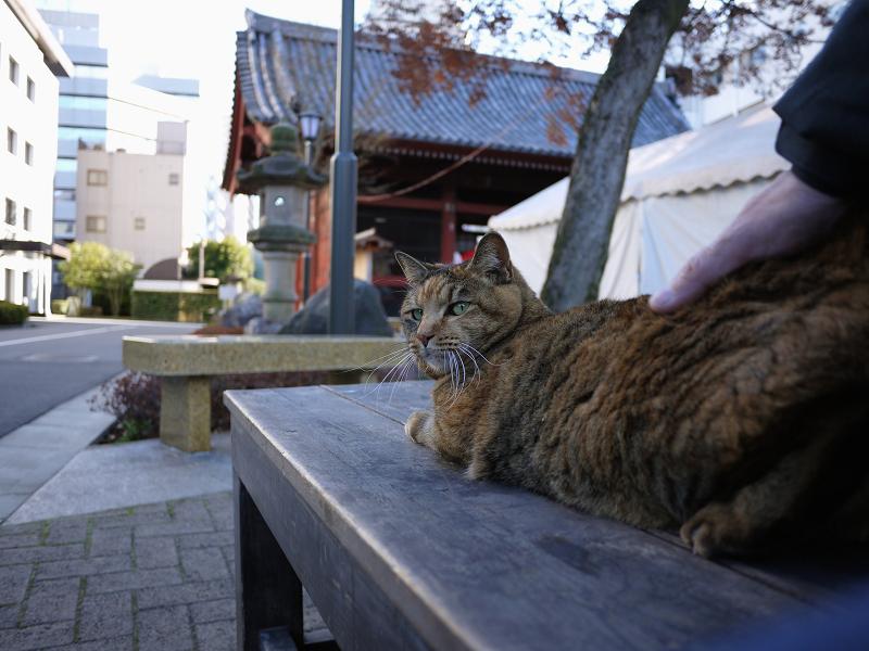 背中を触られるサビ猫1
