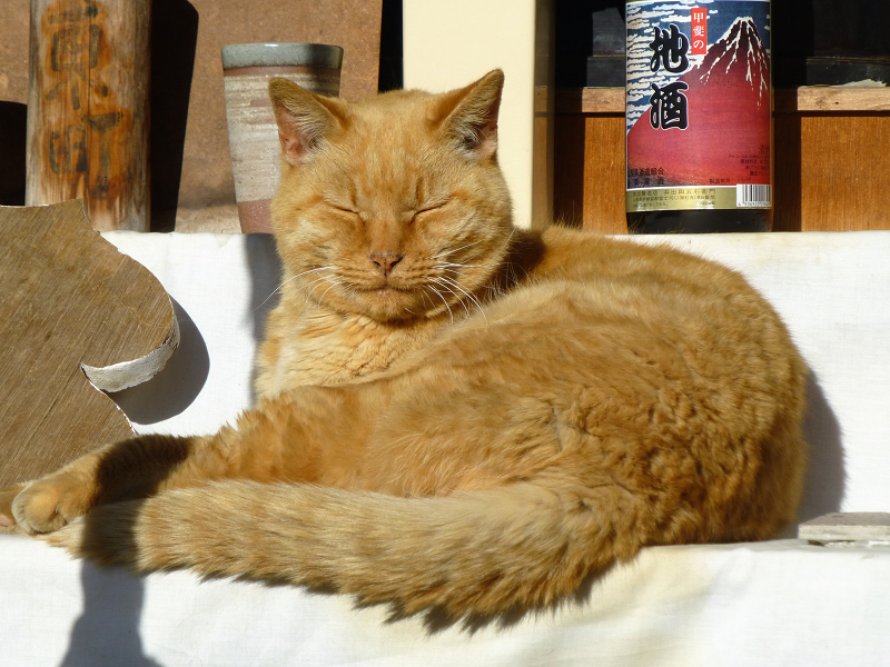 祭壇の茶トラ猫