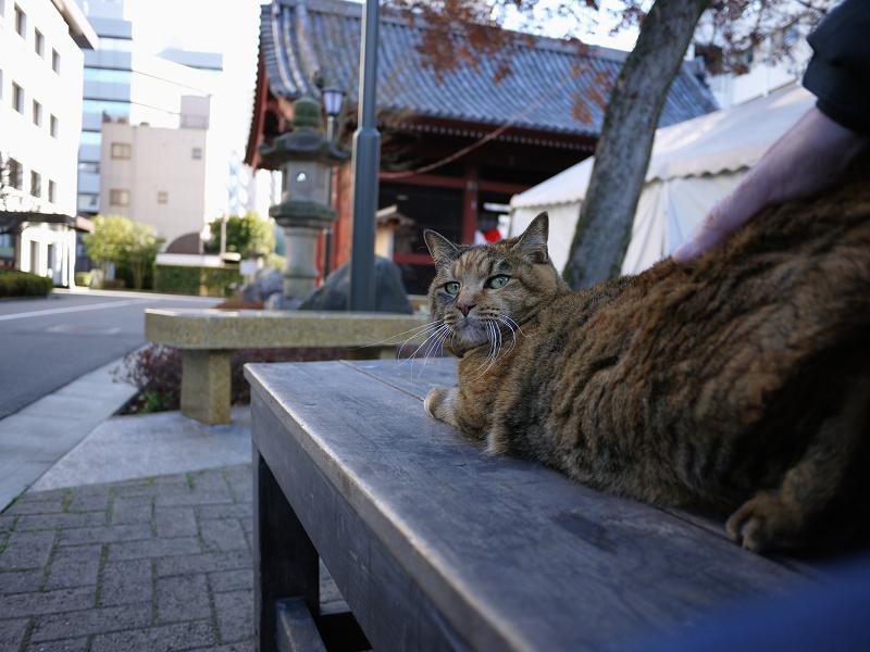 背中を触られるサビ猫2