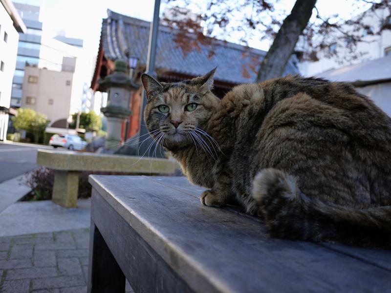 背中を触られるサビ猫3