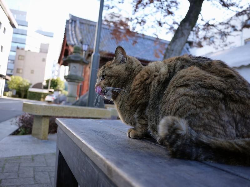 背中を触られるサビ猫4
