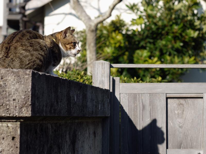 陽射しと猫の影