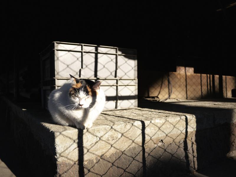 濡れ縁の下の三毛猫1
